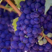 Quel est ton vin préféré?