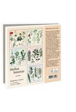 Card Wallet Stoepplantjes, Hortus botanicus Leiden