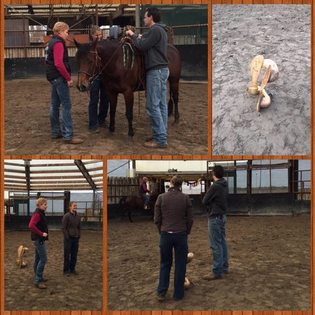 euro-horse western riding supplies Zadelpasconsult Nederland en België