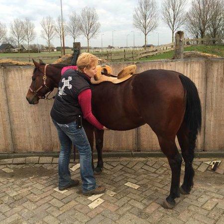 euro-horse western riding supplies Satteltermin Deutschland