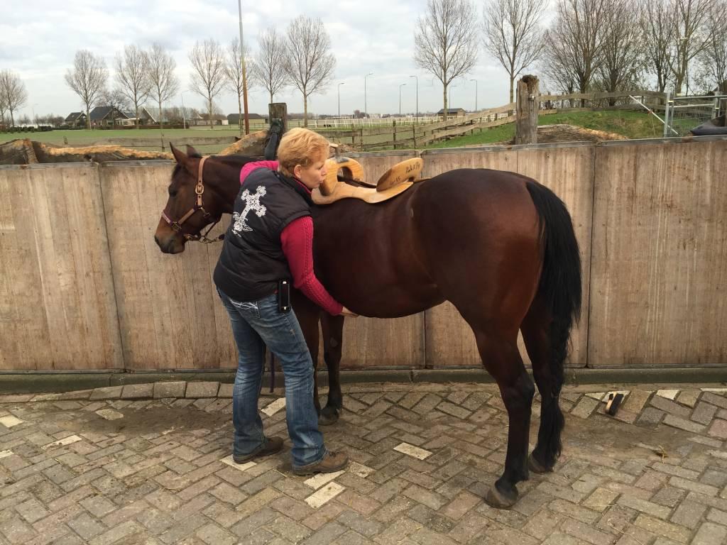Euro-Horse western riding supplies Zadelpasconsult Duitsland
