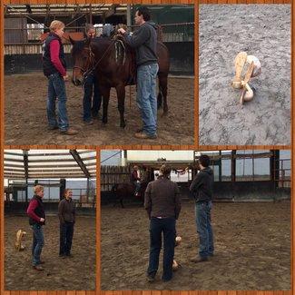 Euro-Horse western riding supplies Sattelpass-Service Niederlande und Belgien