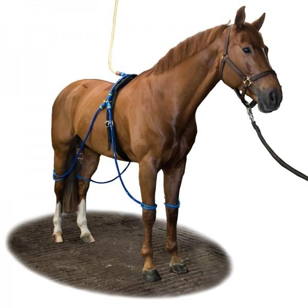 Equine Legcooler Legcooler équine