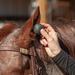 Classic Equine Ear Plugs