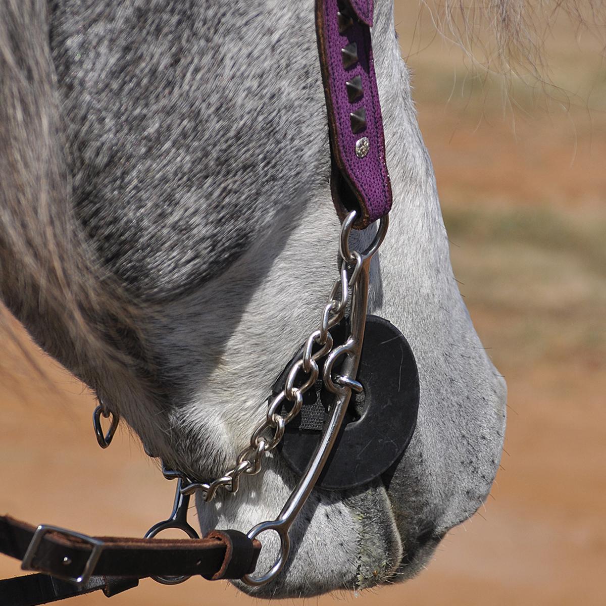 Classic Equine Bit Guard