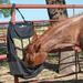 Classic Equine Multi Feed Bag