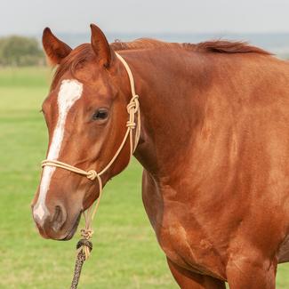 Classic Equine Halster met 9' leadline