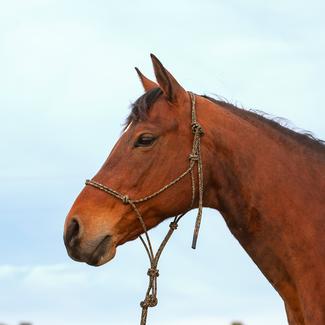 Classic Equine Premium Rope Halter