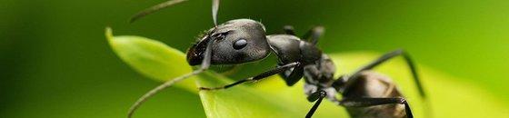 Kruipende Insecten Bestrijden