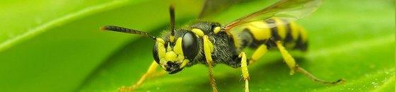 Vliegende Insecten Bestrijden