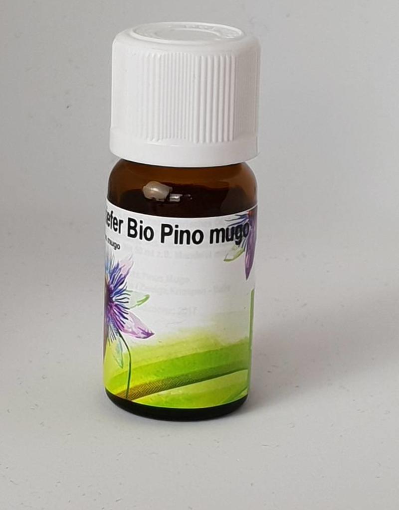 Bio Bergkiefer Pinus mugo