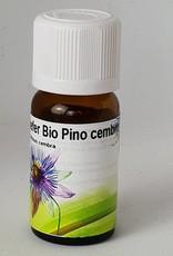 Zirbelkiefer Pinus cembra