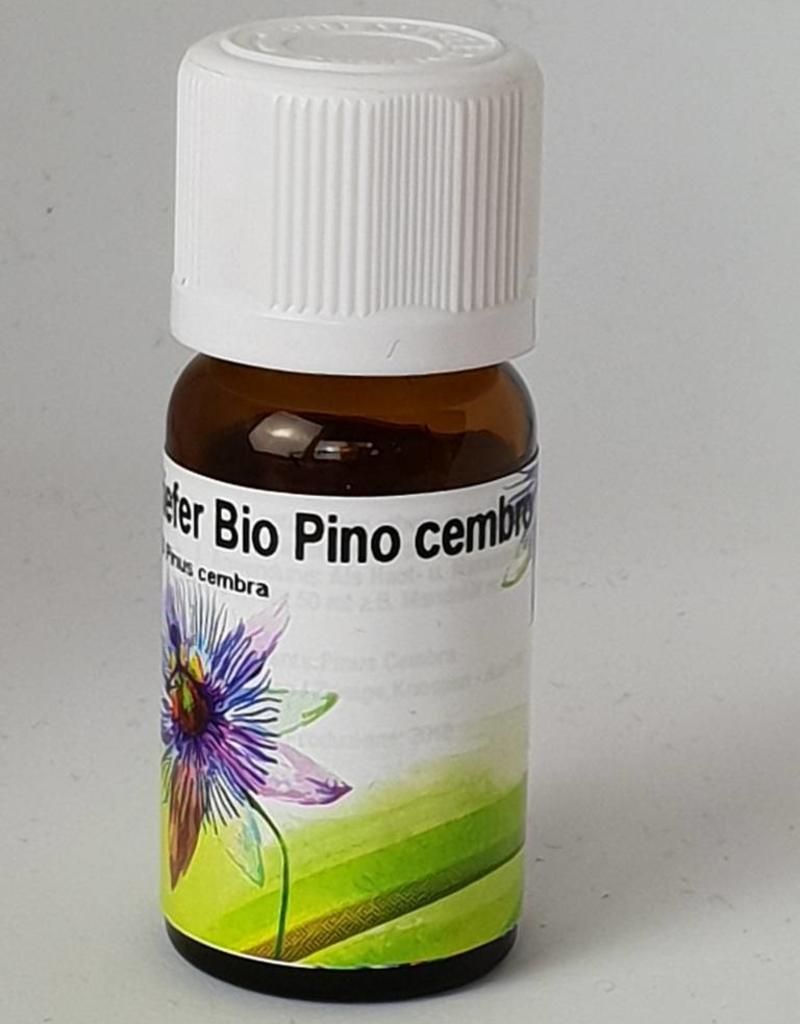 Pino cembro  Pinus cembra