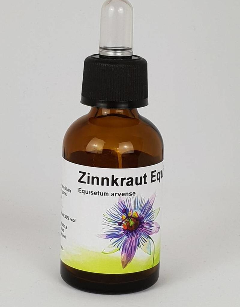 Zinnkraut Equisetum arvense 1:1