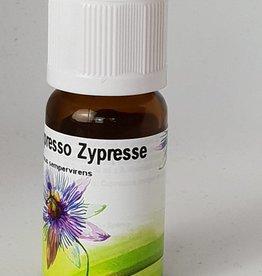 Bio Zypresse - Cupressus sempervirens
