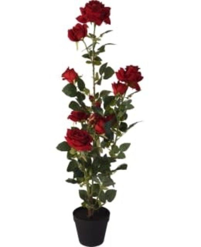 PLANT 95CM ROSE