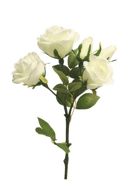 Rose spray Acton x5 cream 53cm
