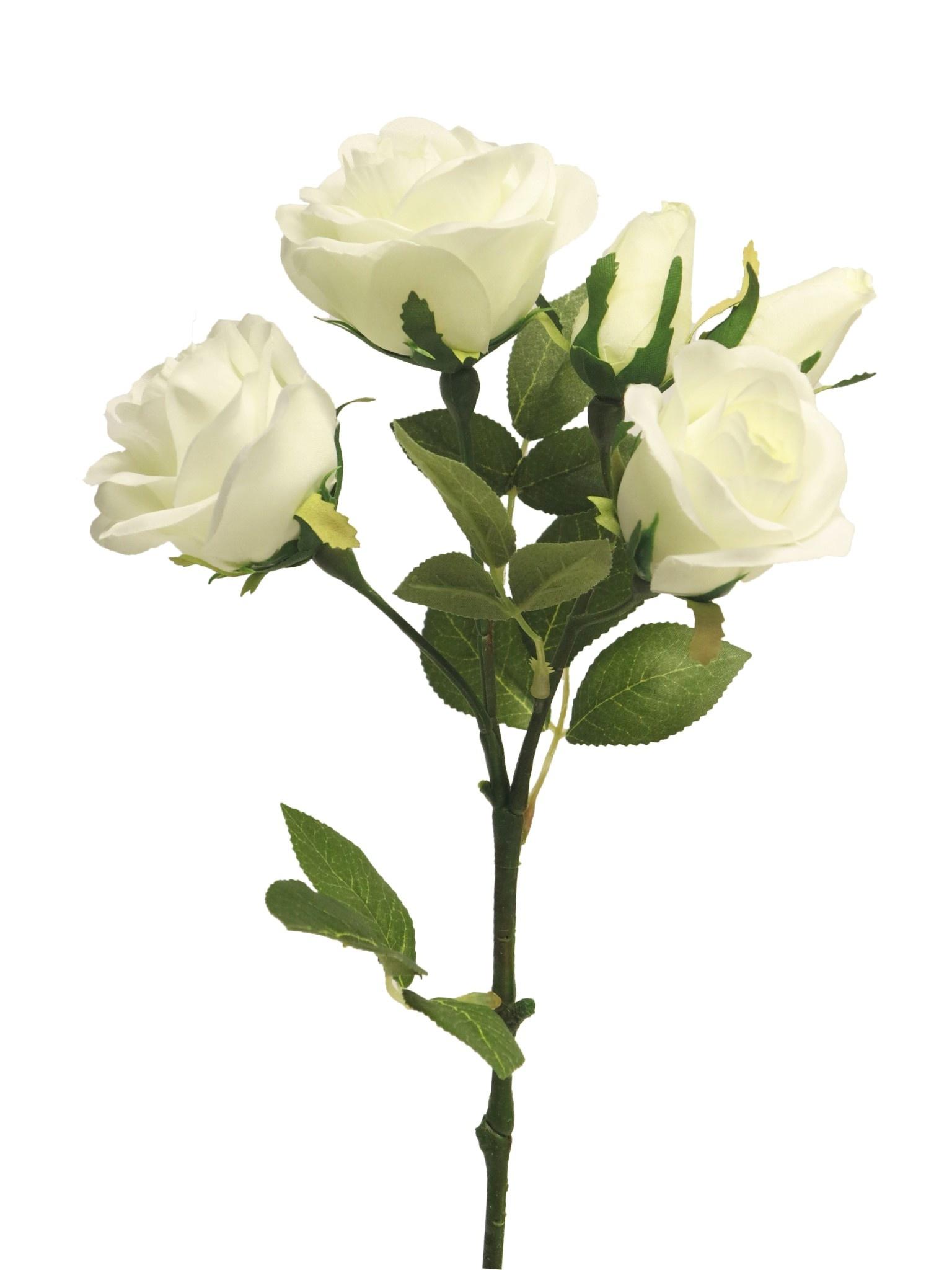 Rose spray Acton x5 cream 53cm-1
