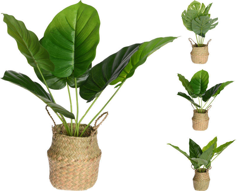 PLANT IN MAND 46CM