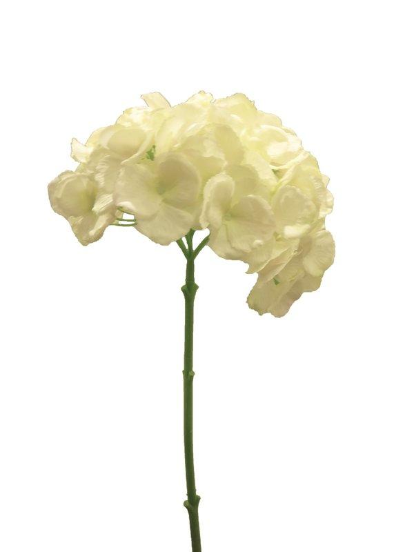 Hydrangea Annabelle cream/green 47cm