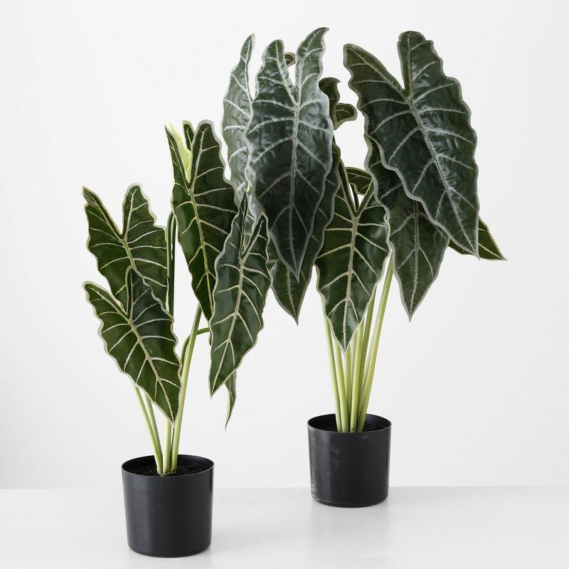 PLANT IN POT H53 CM GROEN