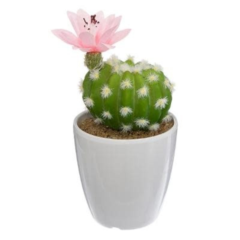 CACTUS IN POT 18CM