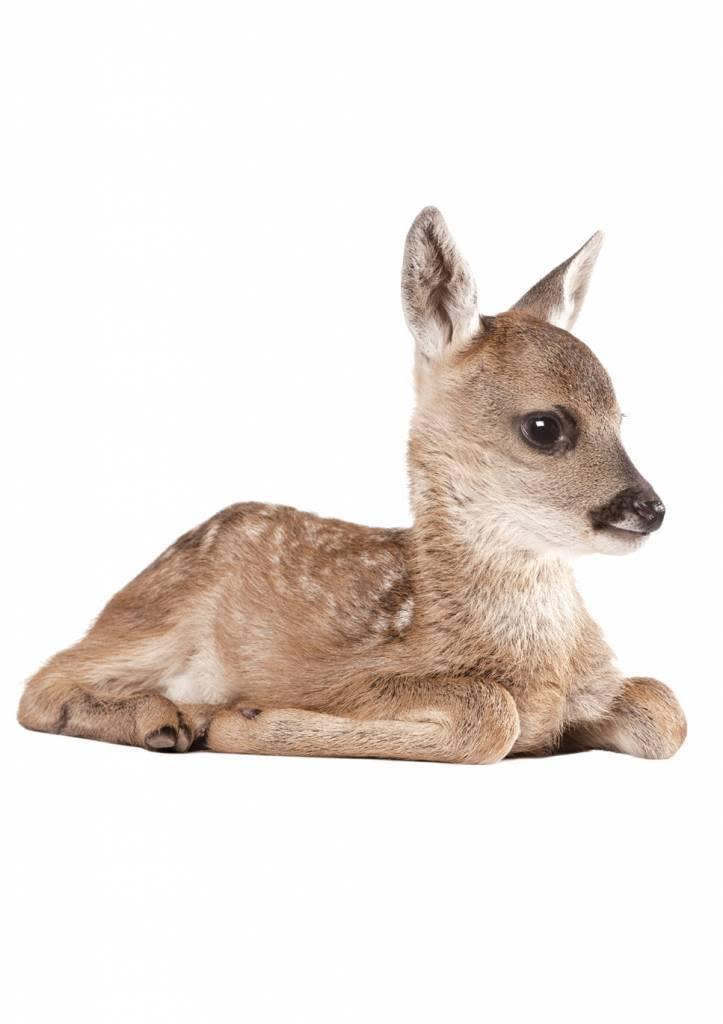 Kek Amsterdam Muursticker Forest Friends Deer XL