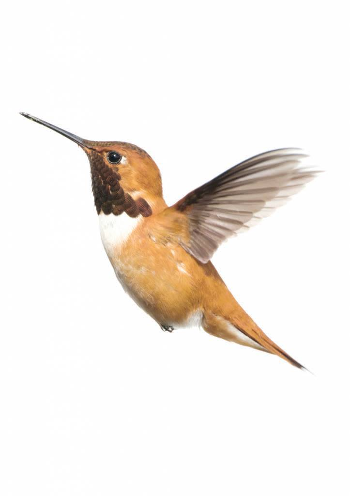 Kek Amsterdam Muursticker Forest Friends Hummingbird XL