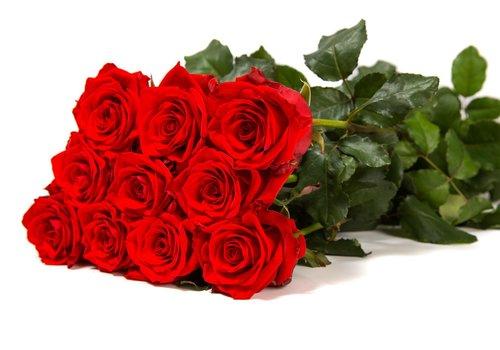 Bos rode rozen