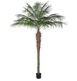 Green Coconut Palm Tree in Black Plastic Pot - 262 cm