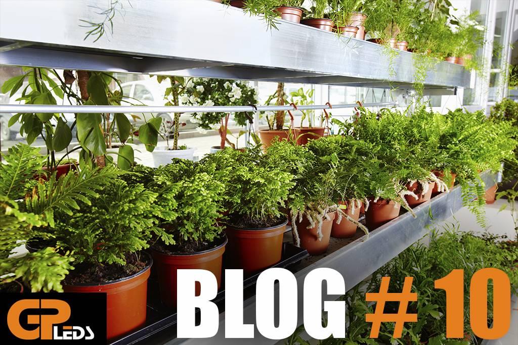 Blog #10 - Nitraatgehaltes in bladgroenten beheersen? LED-verlichting!