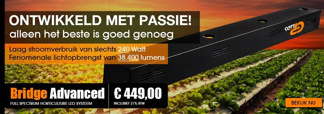 Bridge-Advanced-NL