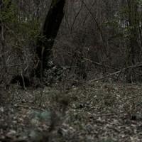 3D Leaf Suit - Dark Woodland