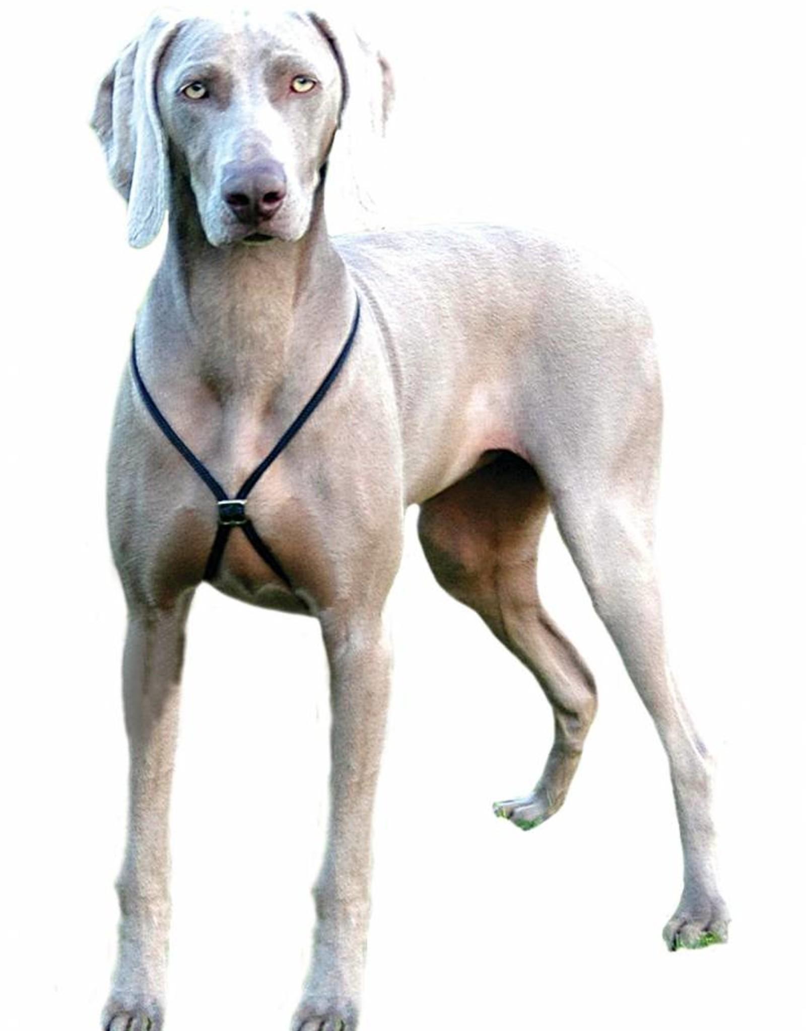 Company of Animals Lupi Dog Harness