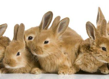 Rabbit Products