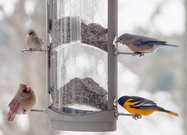 Up to 20% off wild bird