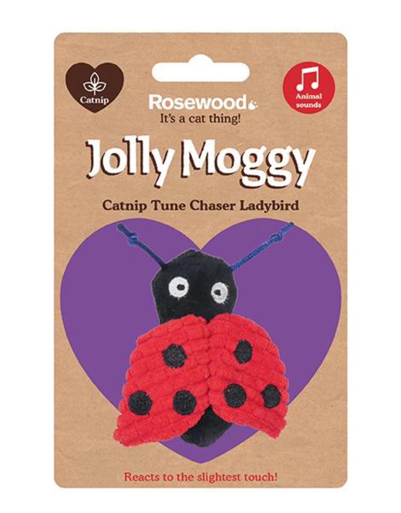 Rosewood Catnip Tune Chaser Ladybird Cat Toy