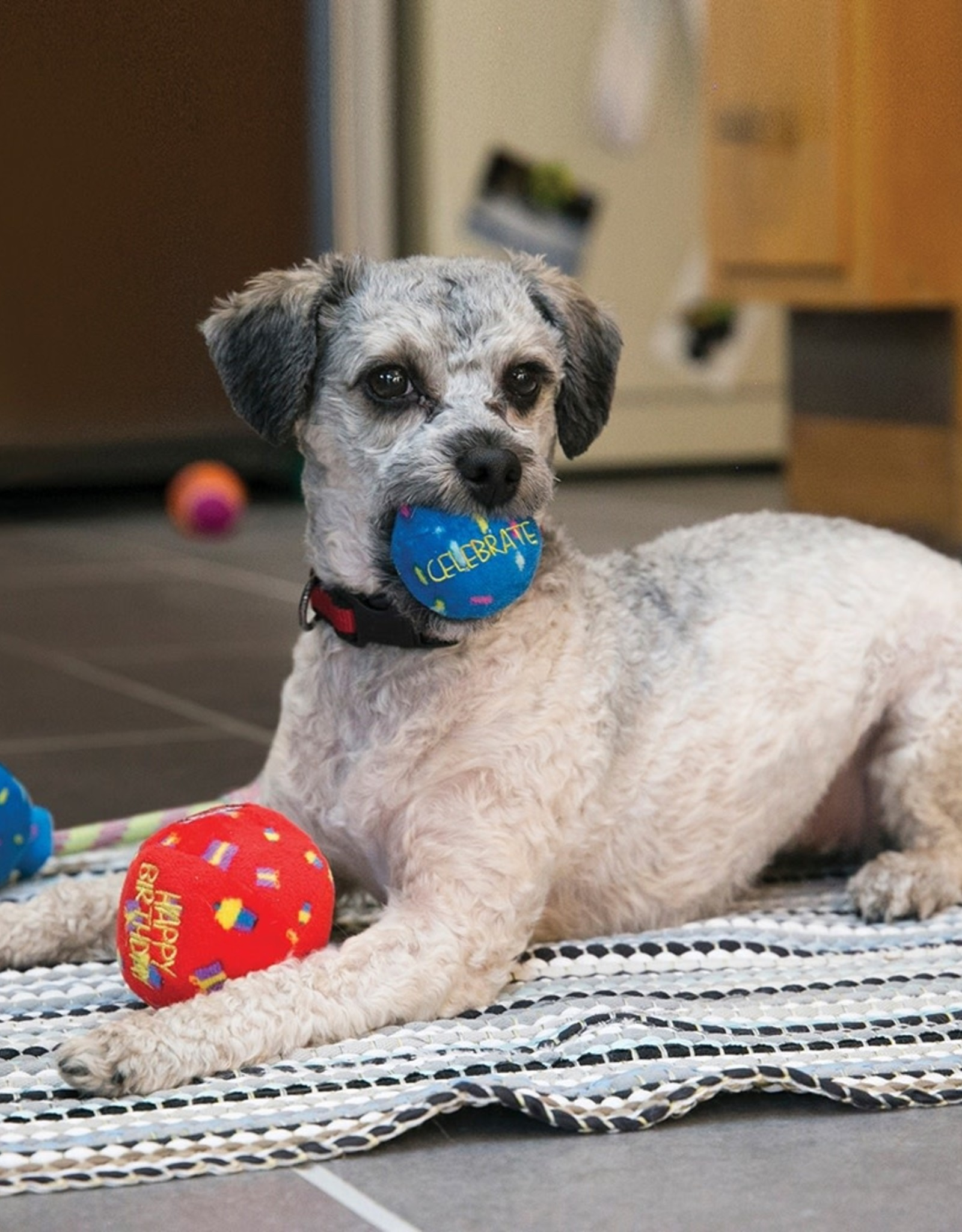 KONG Occasions Birthday Balls Dog Toy Medium, 2 pack