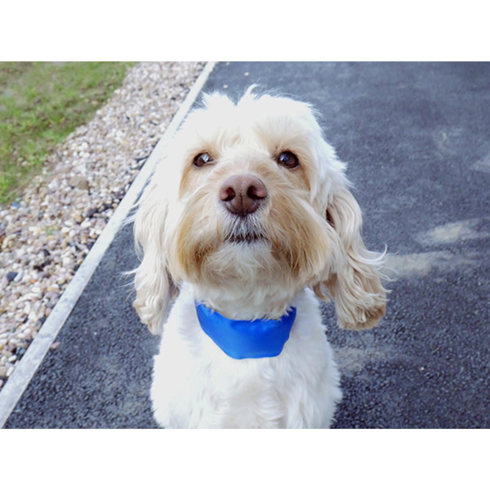 Rosewood Chillax Cool Dog Collar