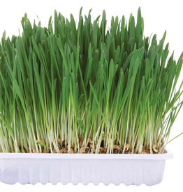 Trixie 'Grow Your Own' Small Animal Grass, 100g