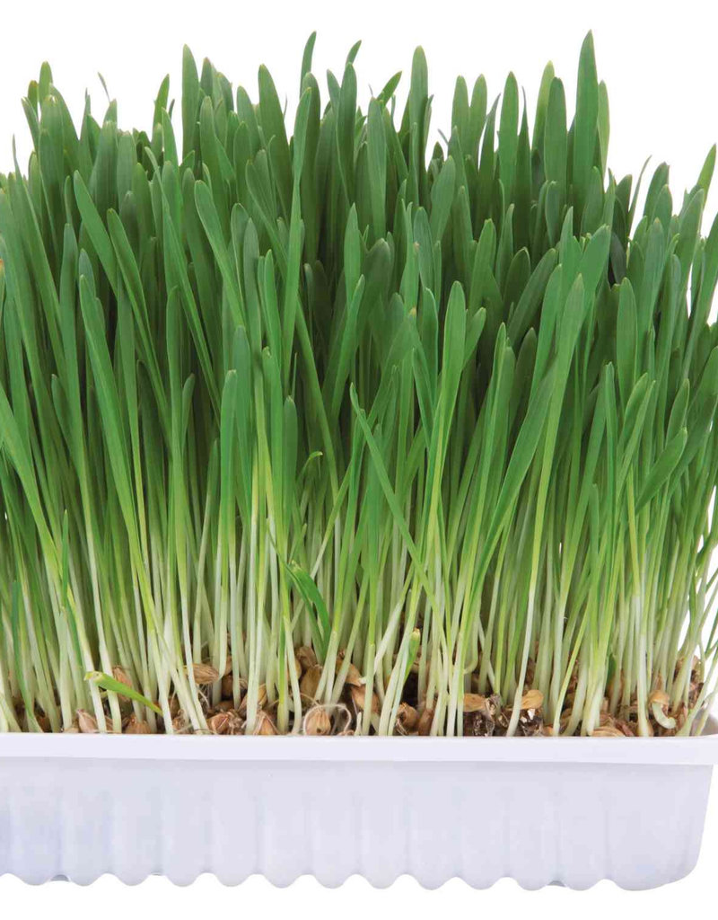Trixie 'Grow Your Own' Small Animal Grass 100g