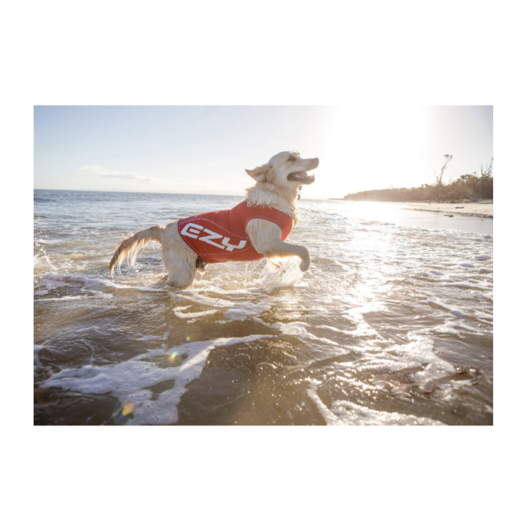 EzyDog Dog Rash Vest with UV Protection