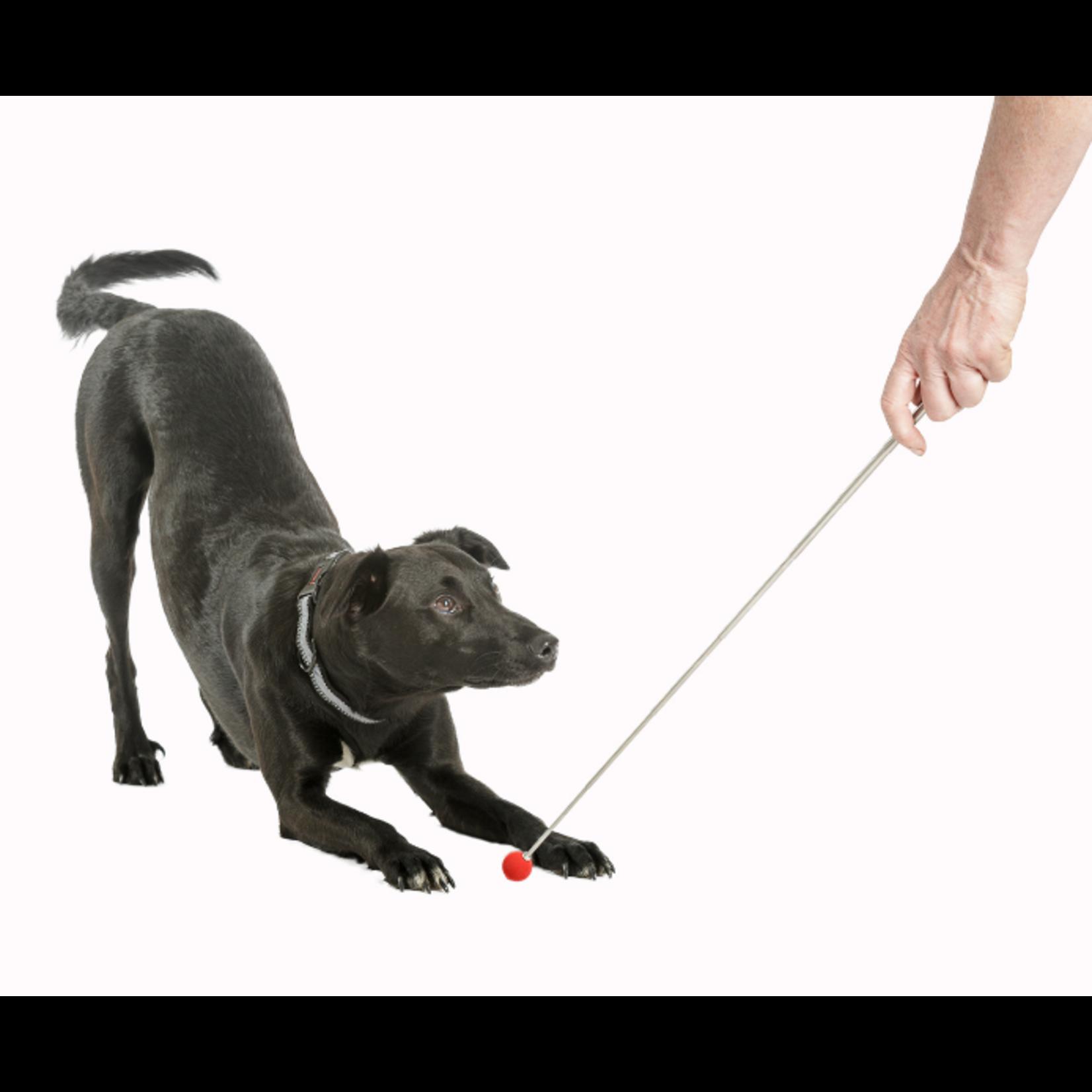 Company of Animals Dog Training Target Stick
