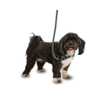 Company of Animals Dog 3 in 1 Slip Lead, Green