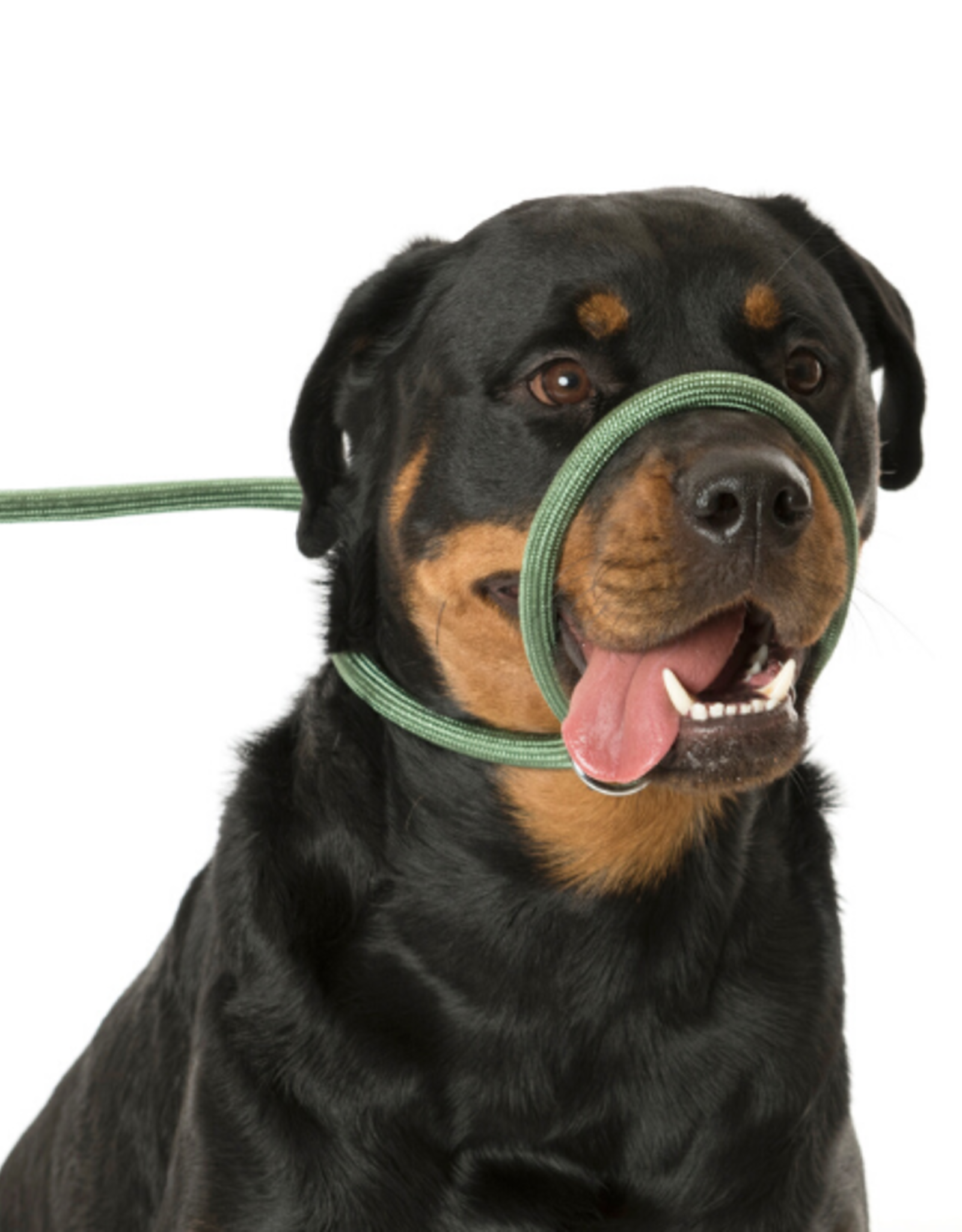 Company of Animals Dog 3 in 1 Slip Lead, Brown