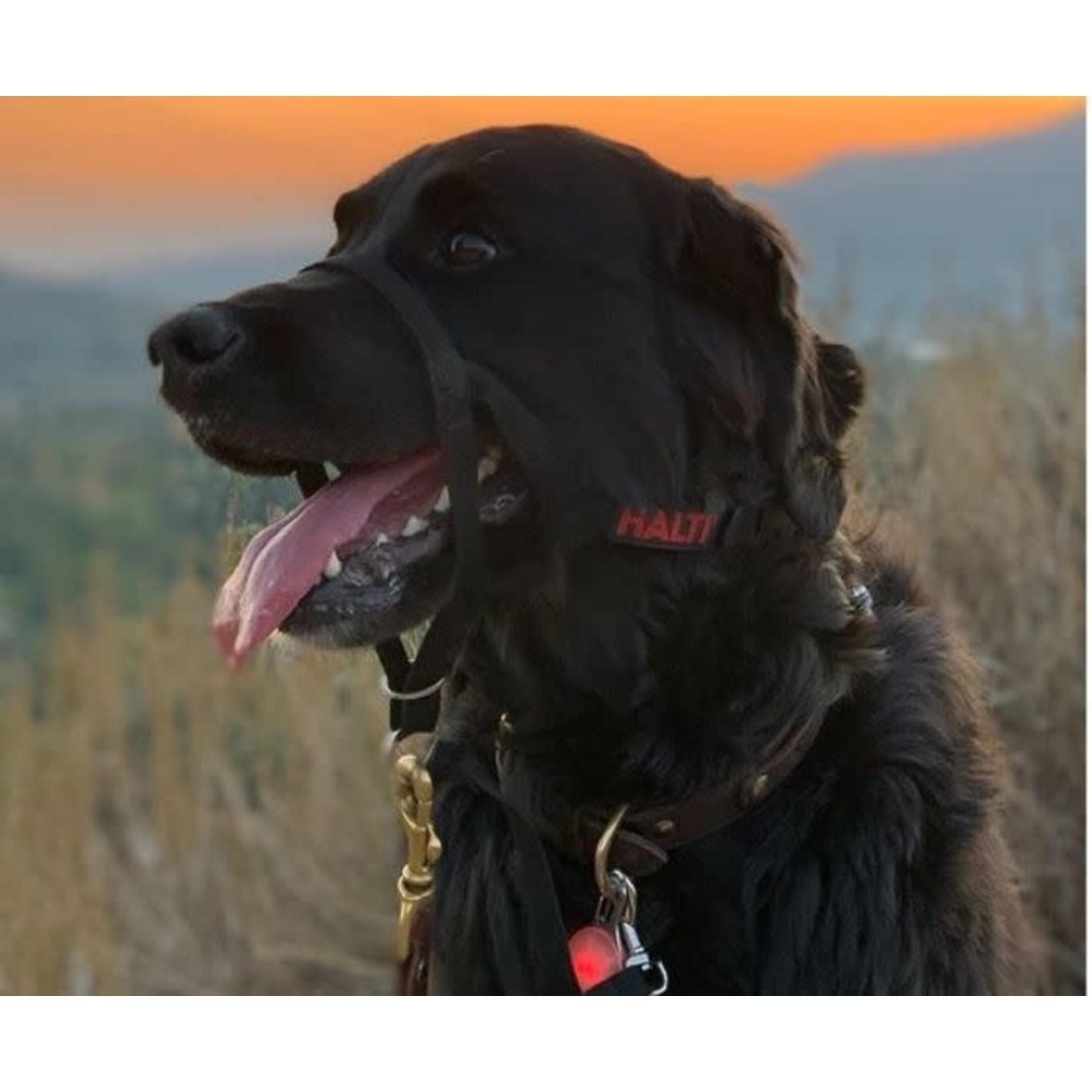 Company of Animals Halti Dog Headcollar, Black