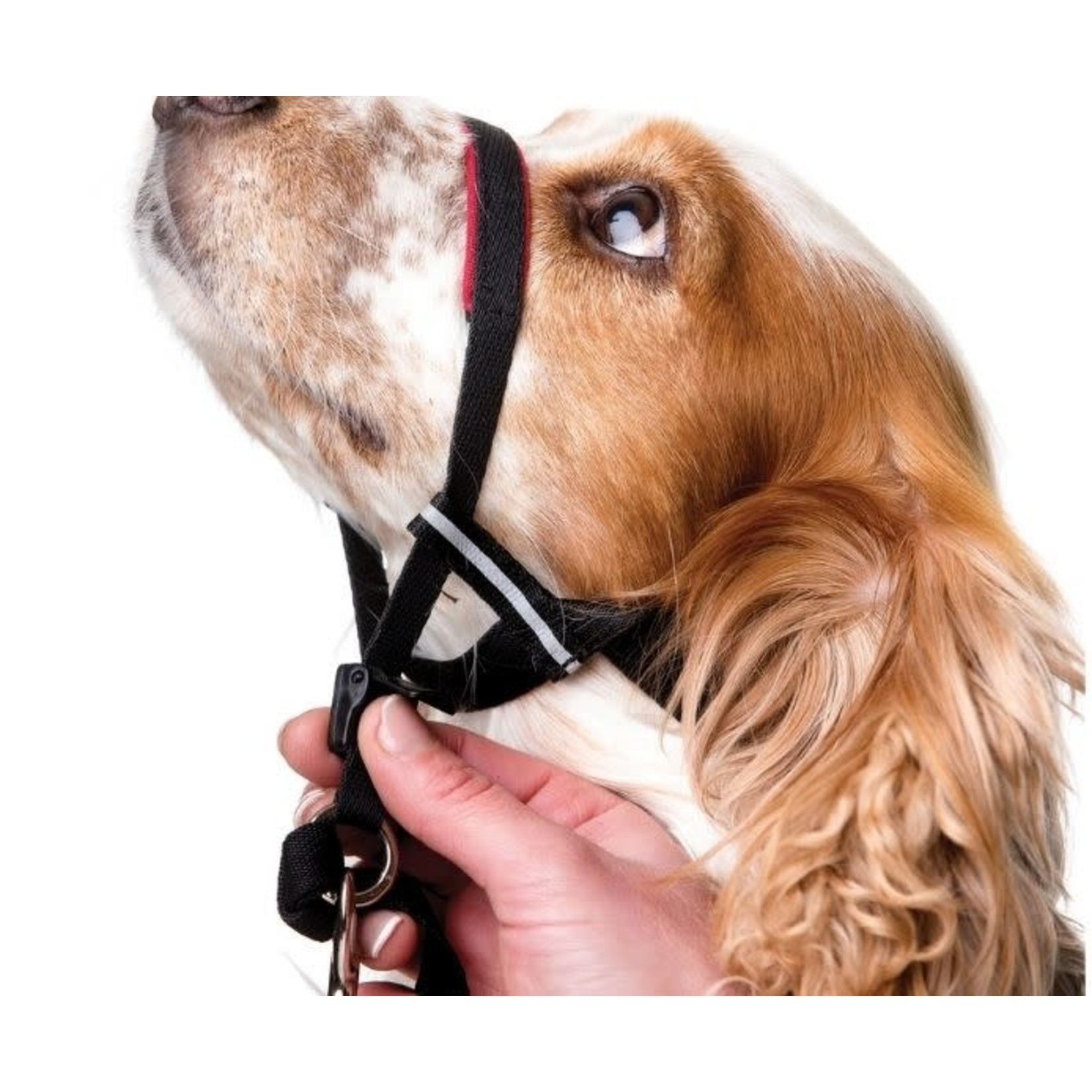 Company of Animals Halti Dog Optifit Headcollar