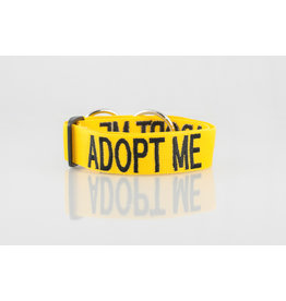 "Friendly Dog Collars ""Adopt Me"" Snap Dog Collar, Small *CLEARANCE"
