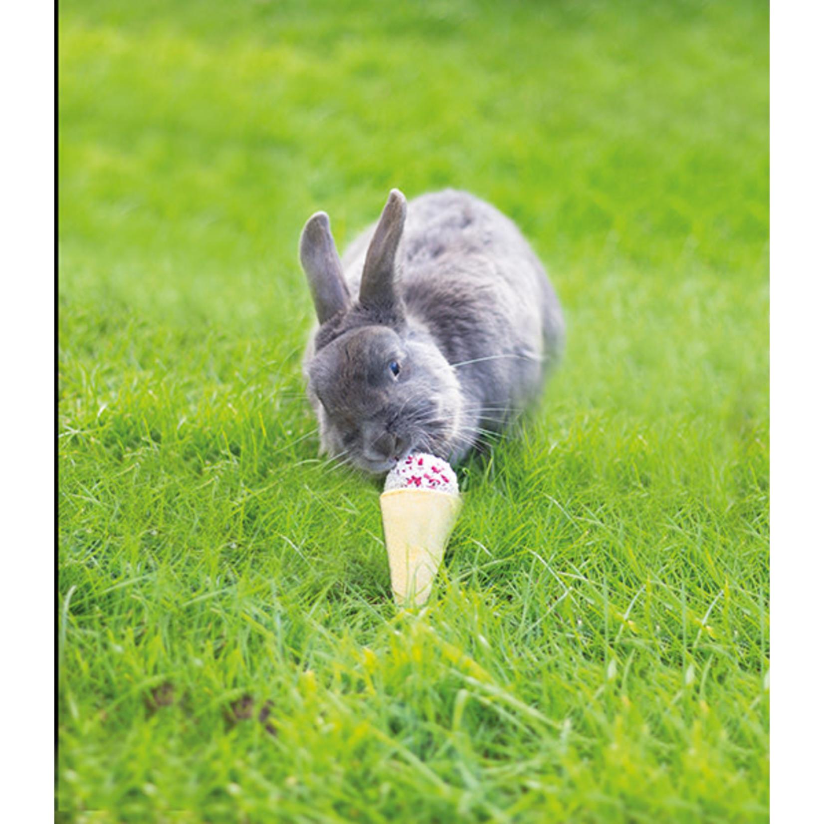 Rosewood Boredom Breaker Naturals Raspberry 'n' Coconut Cone Small Animal Treat
