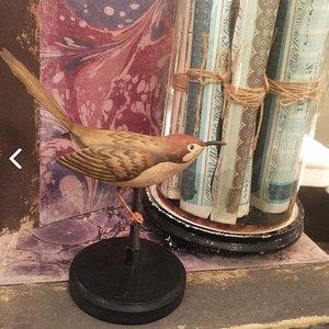 Snijdervogel op Houten Sokkeltje